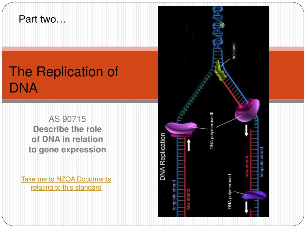 as 90715 describe the role of dna in relation to gene expression l.