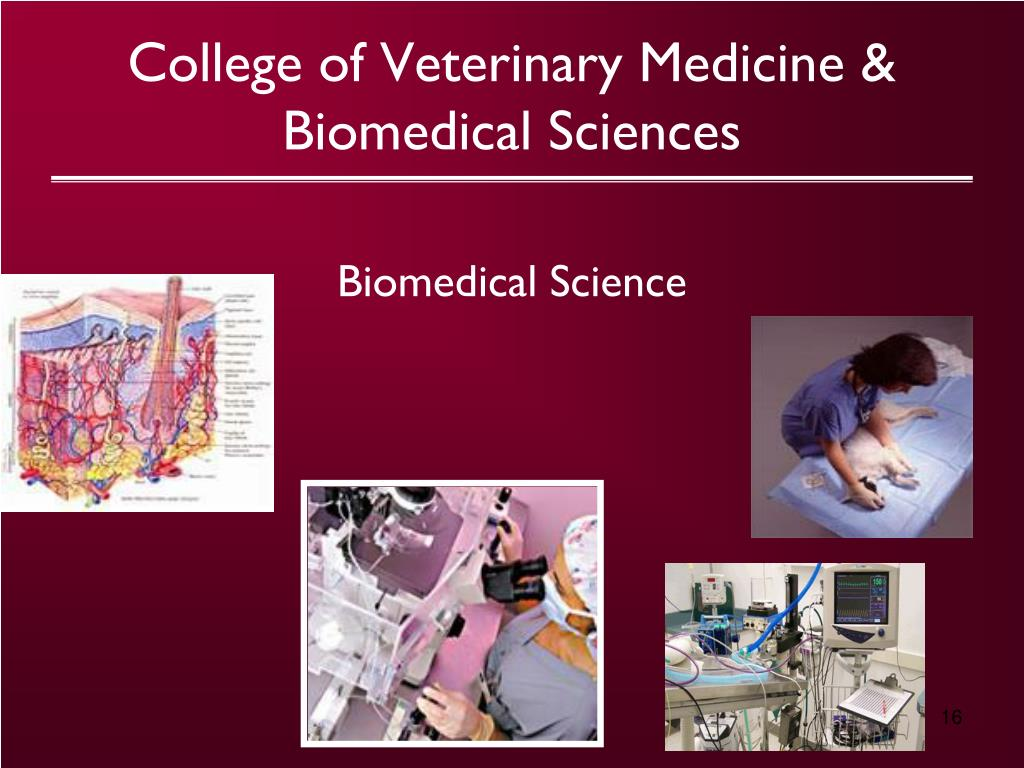 College of Veterinary Medicine &