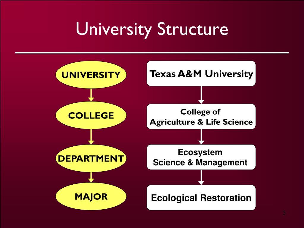 University Structure