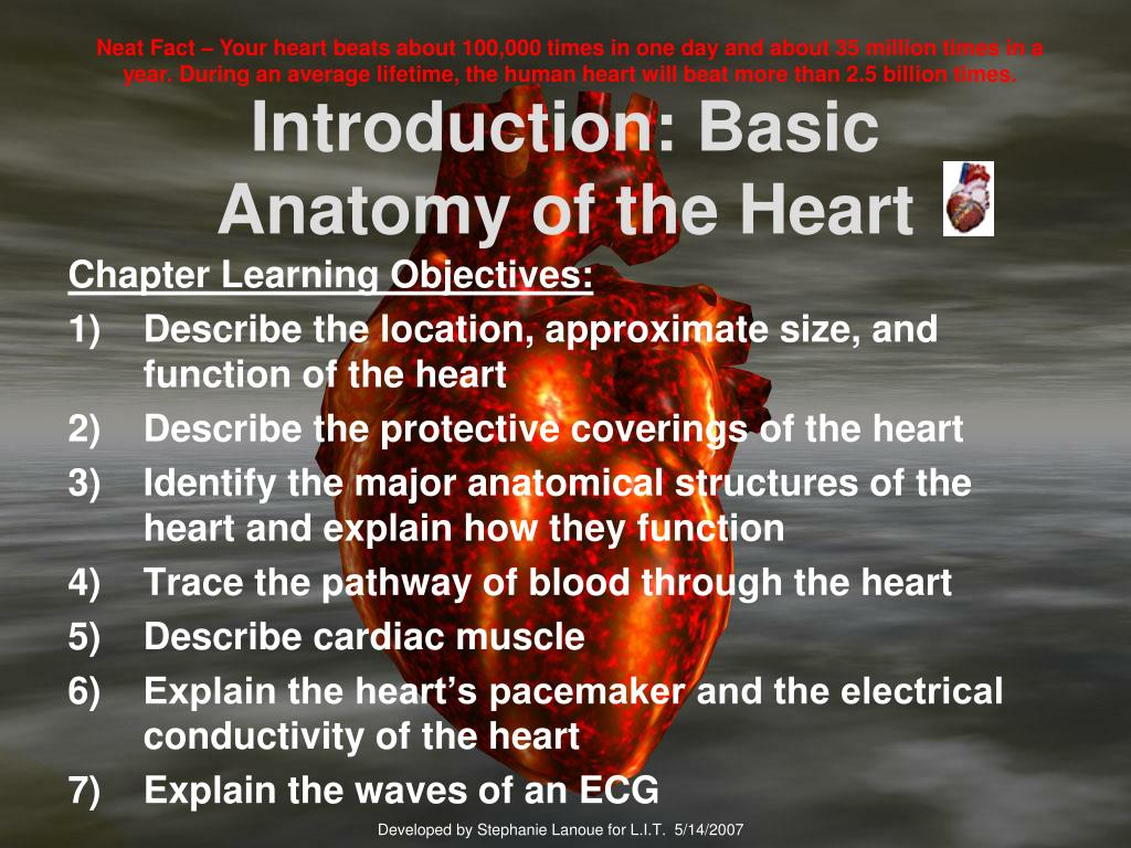 introduction basic anatomy of the heart l.