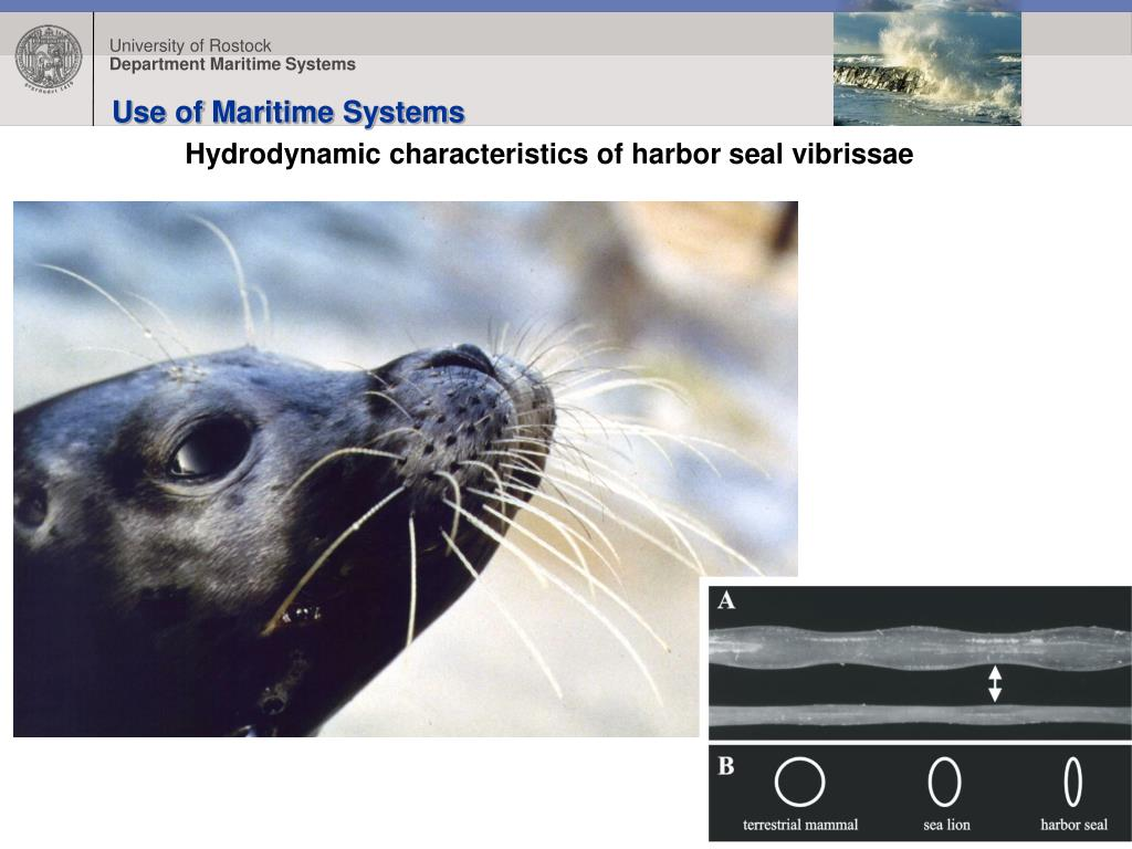 Use of Maritime Systems