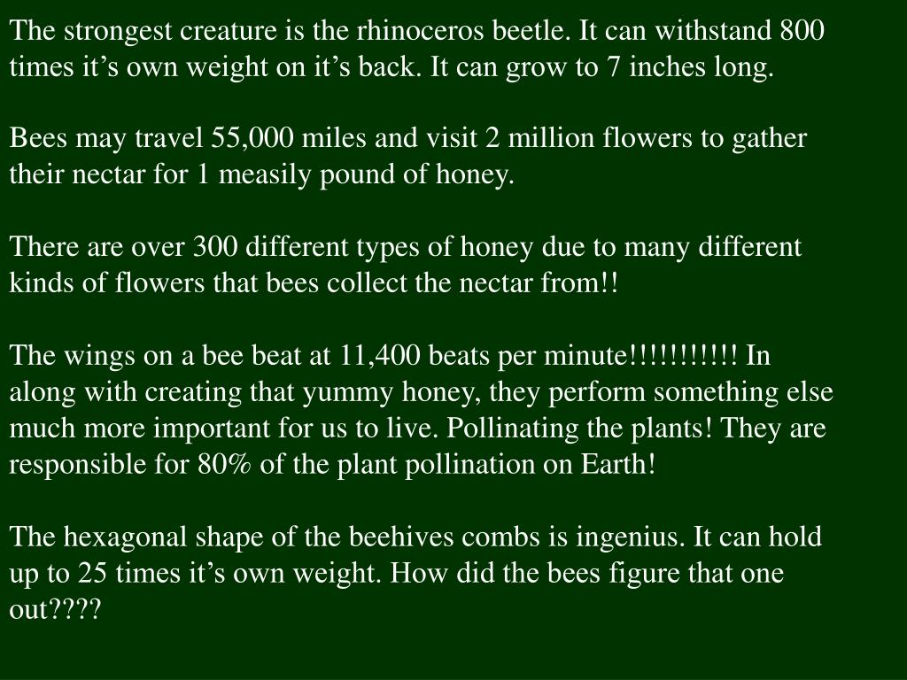 The strongest creature is the rhinoceros beetle. It can withstand 800 times it's own weight on it's back. It can grow to 7 inches long.