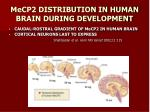 mecp2 distribution in human brain during development