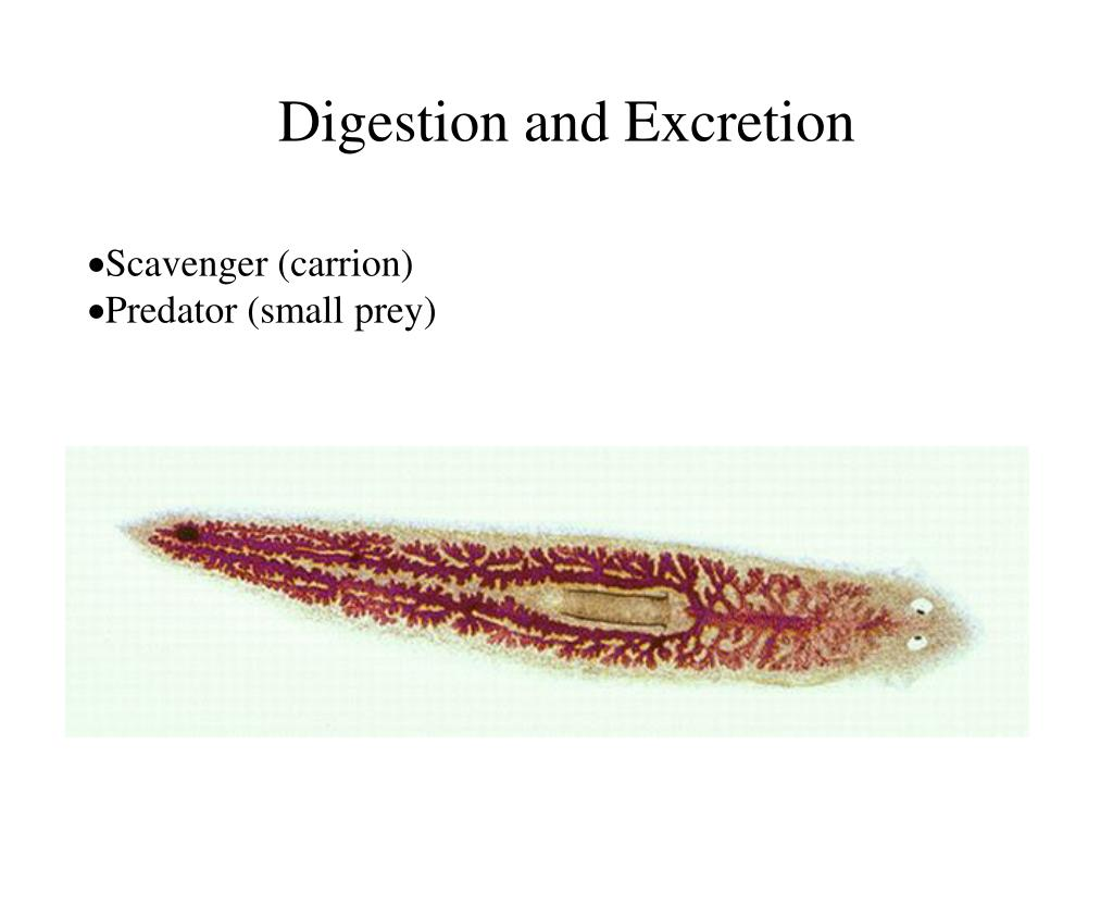 Digestion and Excretion