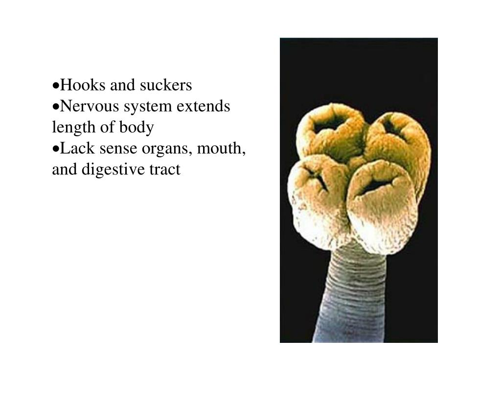 Hooks and suckers