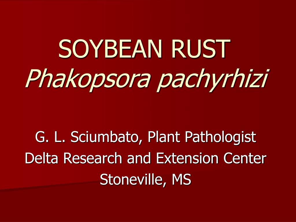 soybean rust phakopsora pachyrhizi l.