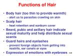 functions of hair