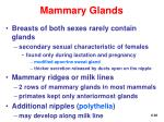 mammary glands