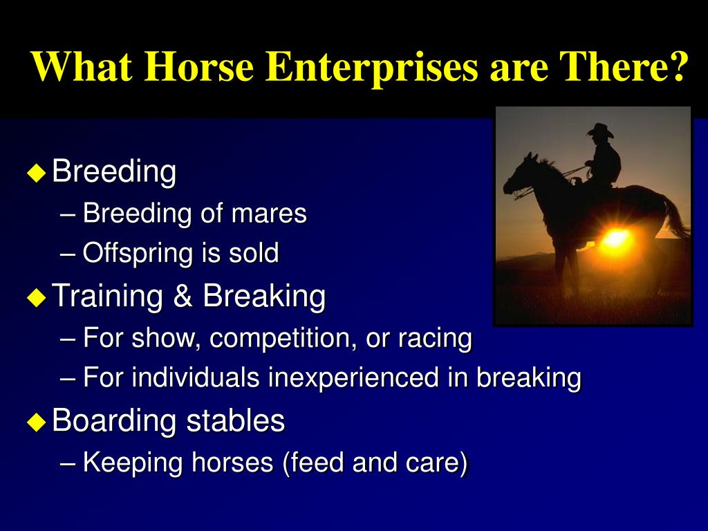 What Horse Enterprises are There?