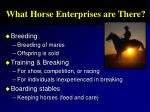 what horse enterprises are there
