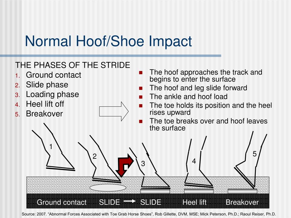 The hoof approaches the track and begins to enter the surface