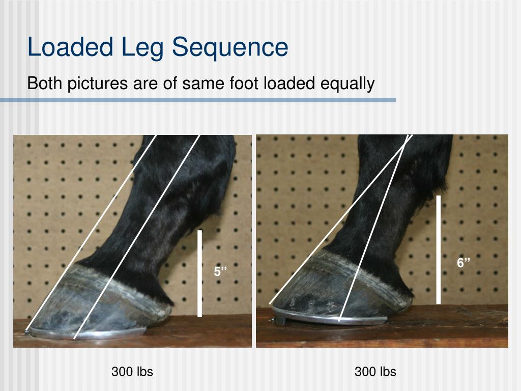 Loaded Leg Sequence