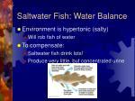 saltwater fish water balance