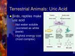 terrestrial animals uric acid