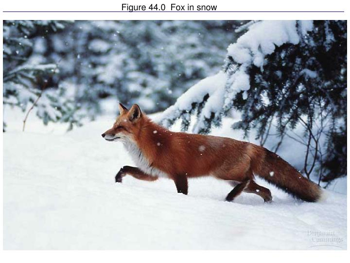 Figure 44 0 fox in snow