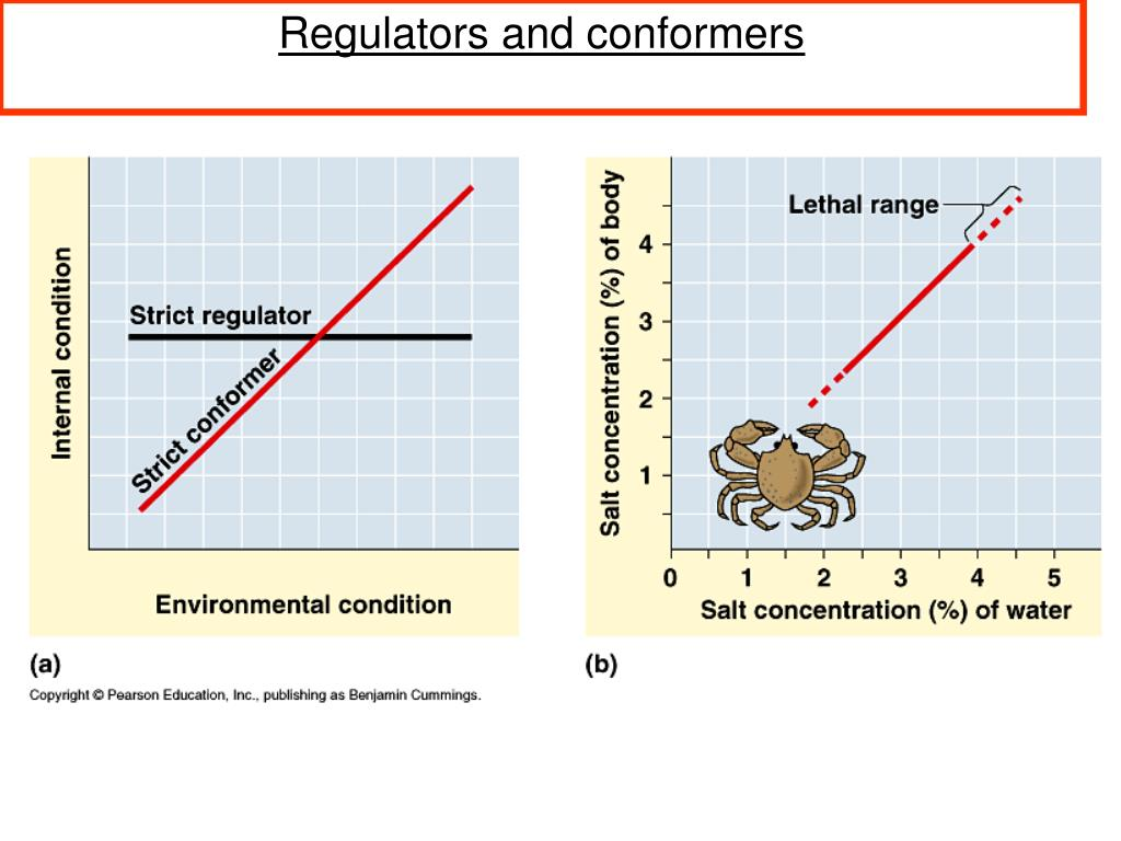 Regulators and conformers