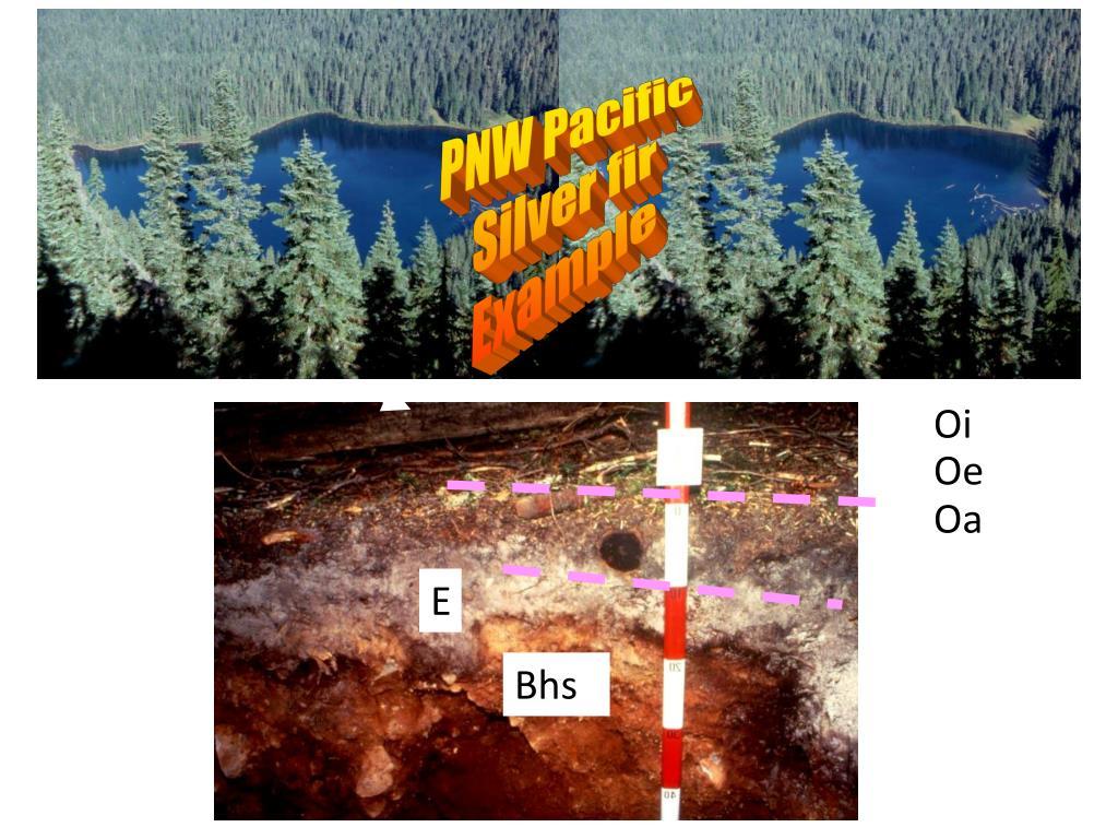 PNW Pacific