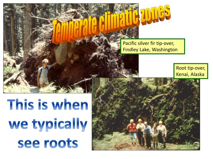 Temperate climatic zones