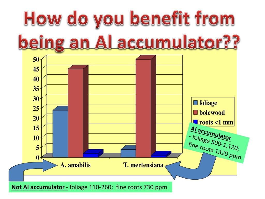 How do you benefit from being an Al accumulator??