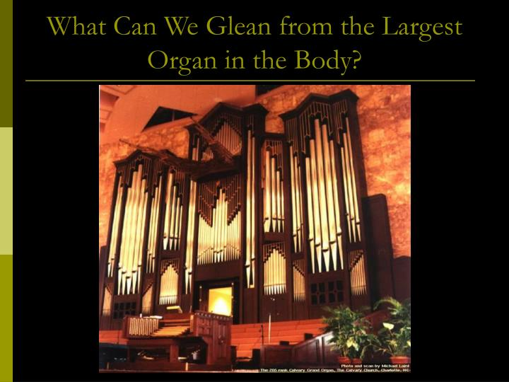 What can we glean from the largest organ in the body