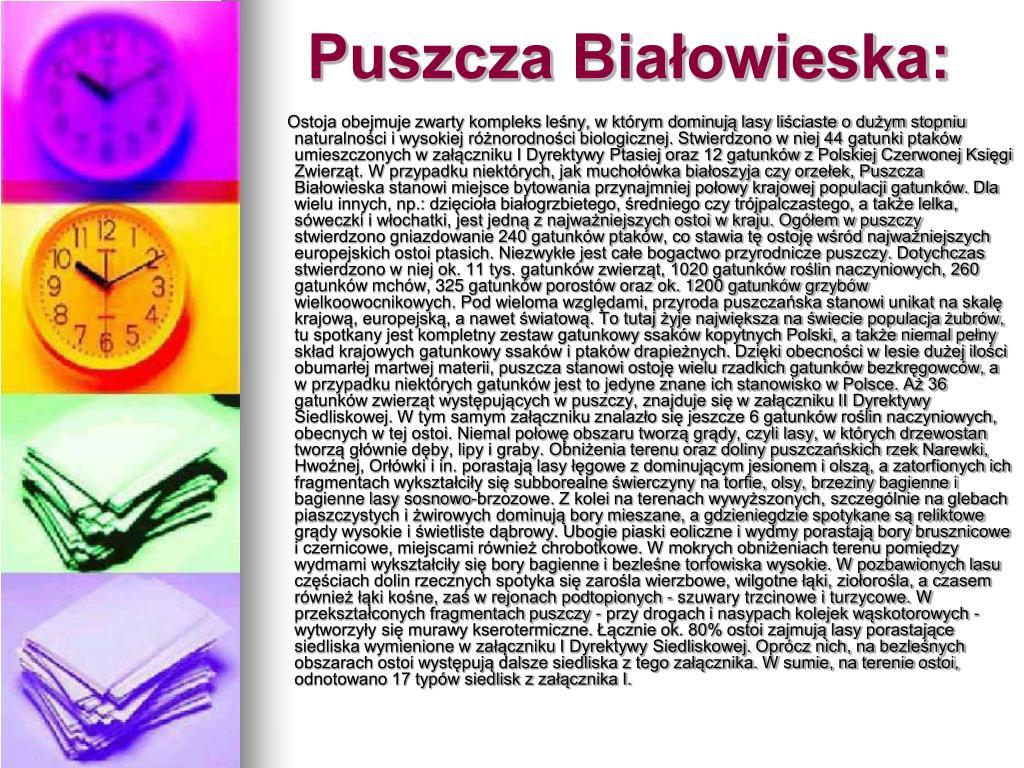 Puszcza Białowieska: