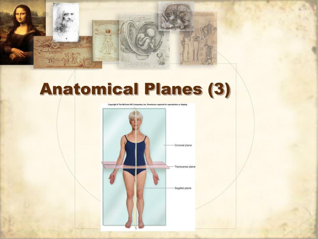 Anatomical Planes (3)
