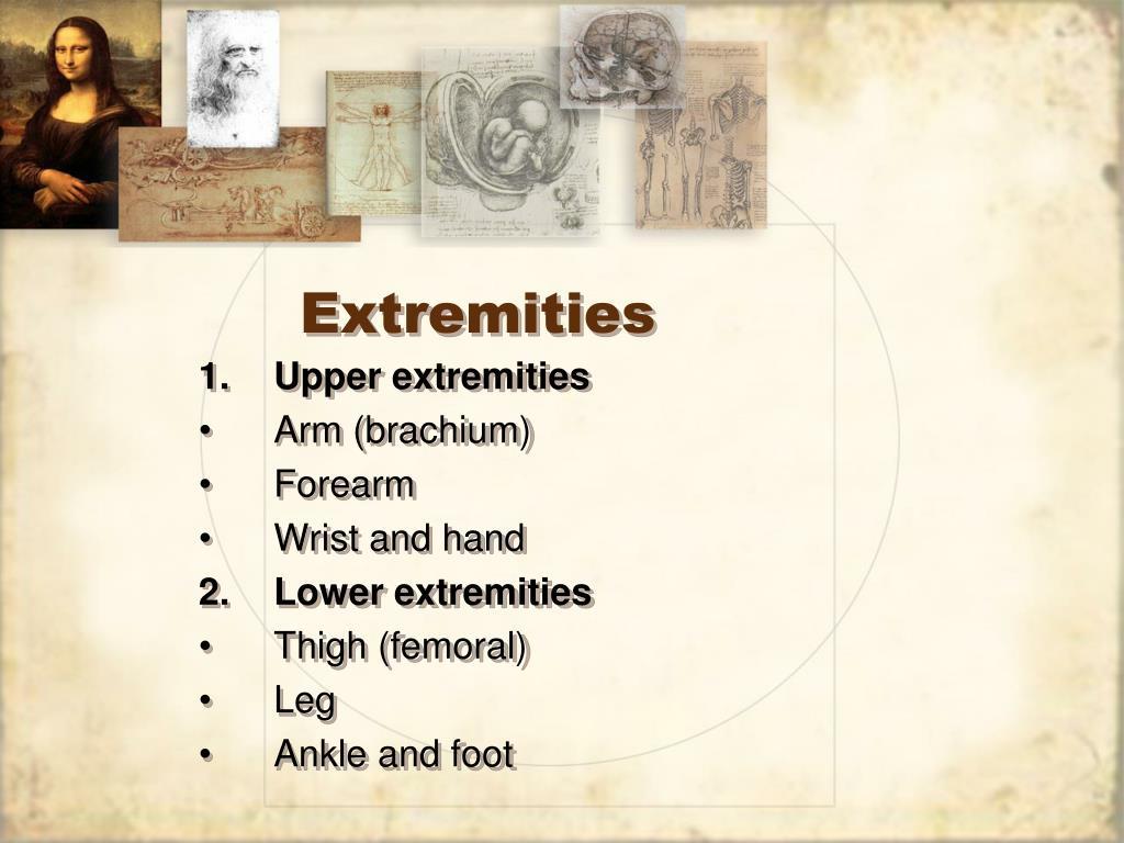 Extremities