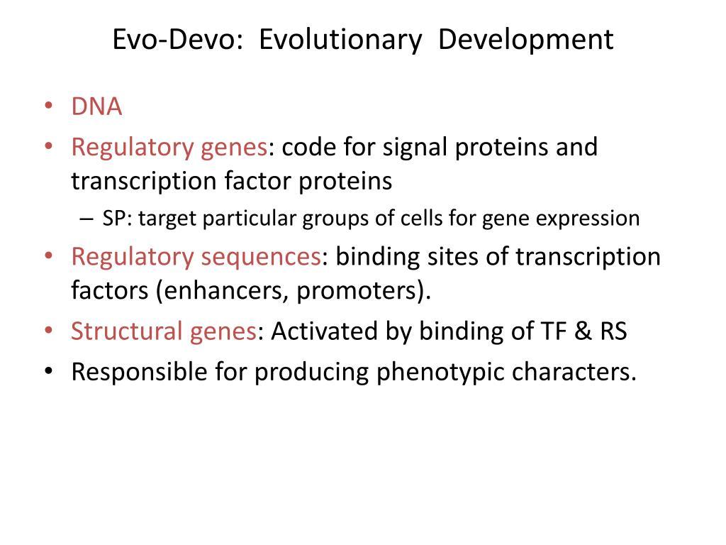 evo devo evolutionary development