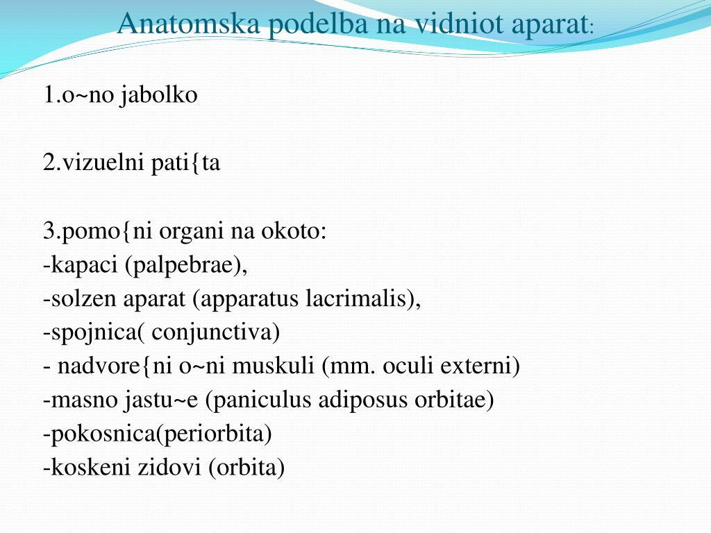Anatomska
