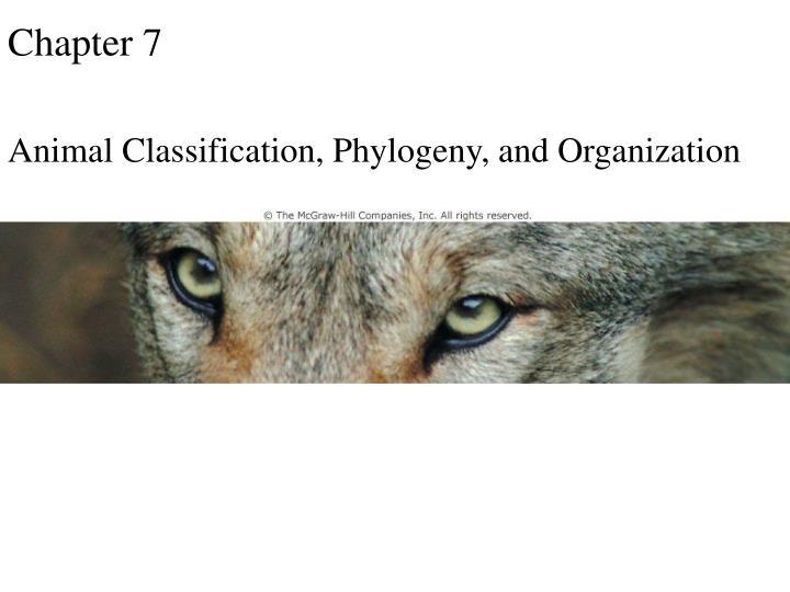 opener chapter 7 n.