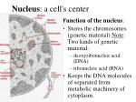 nucleus a cell s center