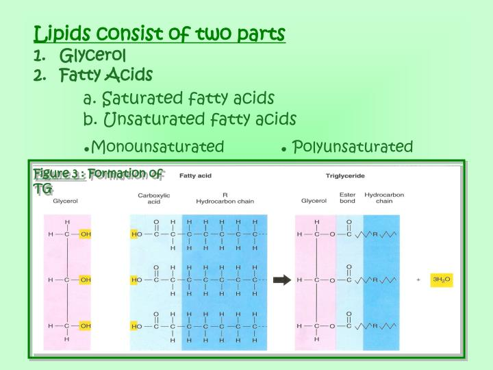 Lipids consist of two parts