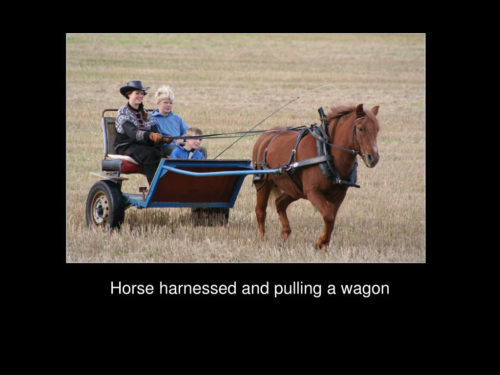 Horse harnessed and pulling a wagon