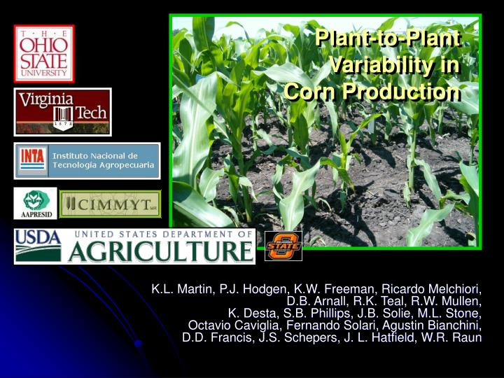 plant to plant variability in corn production n.
