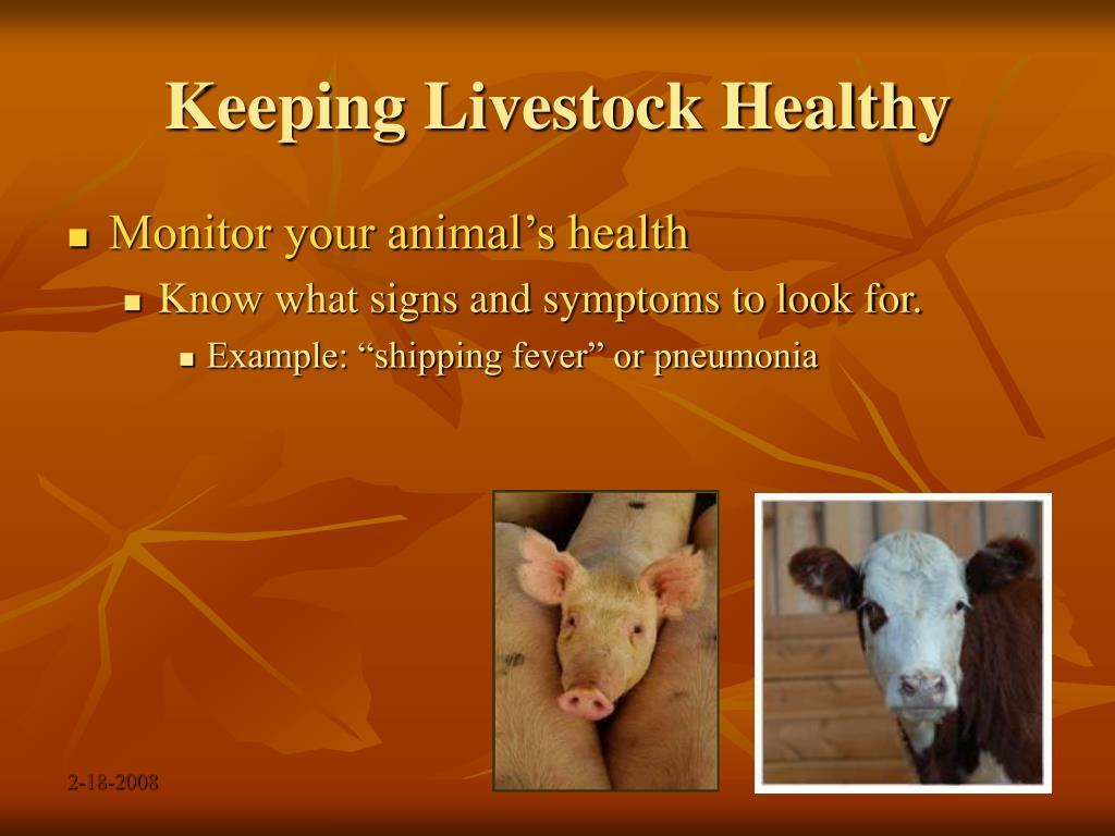 Keeping Livestock Healthy