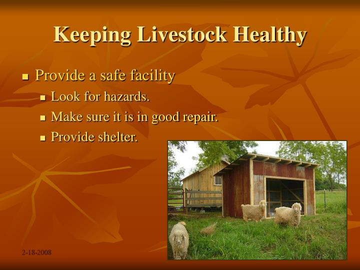 Keeping livestock healthy3
