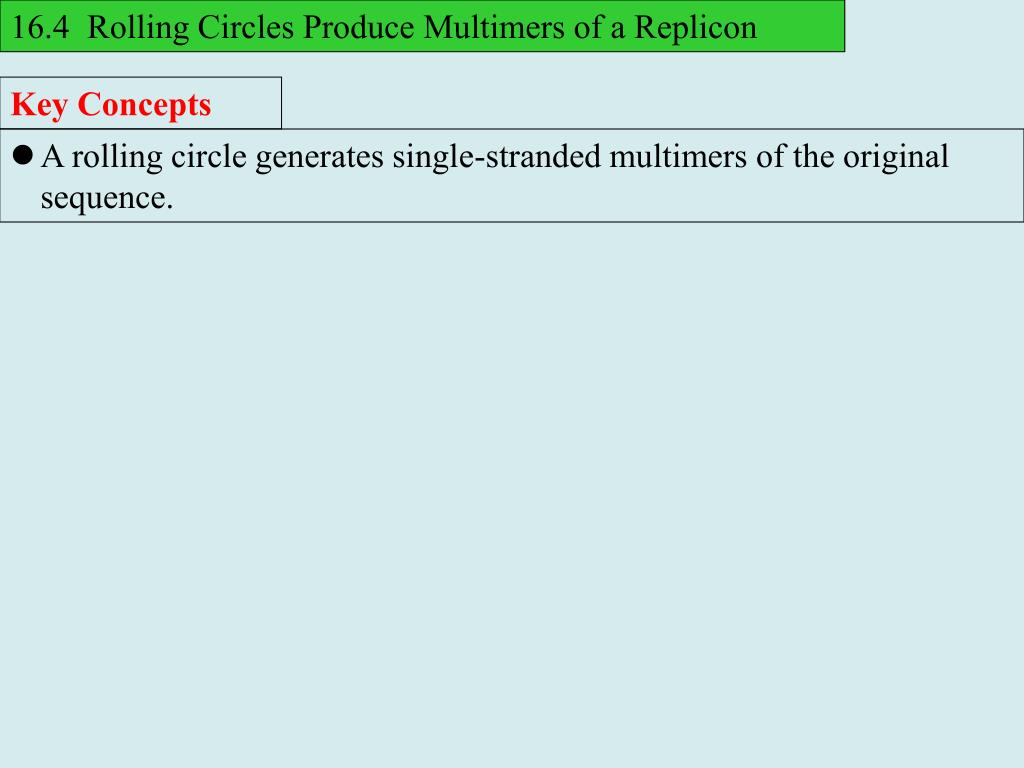 16.4  Rolling Circles Produce Multimers of a Replicon