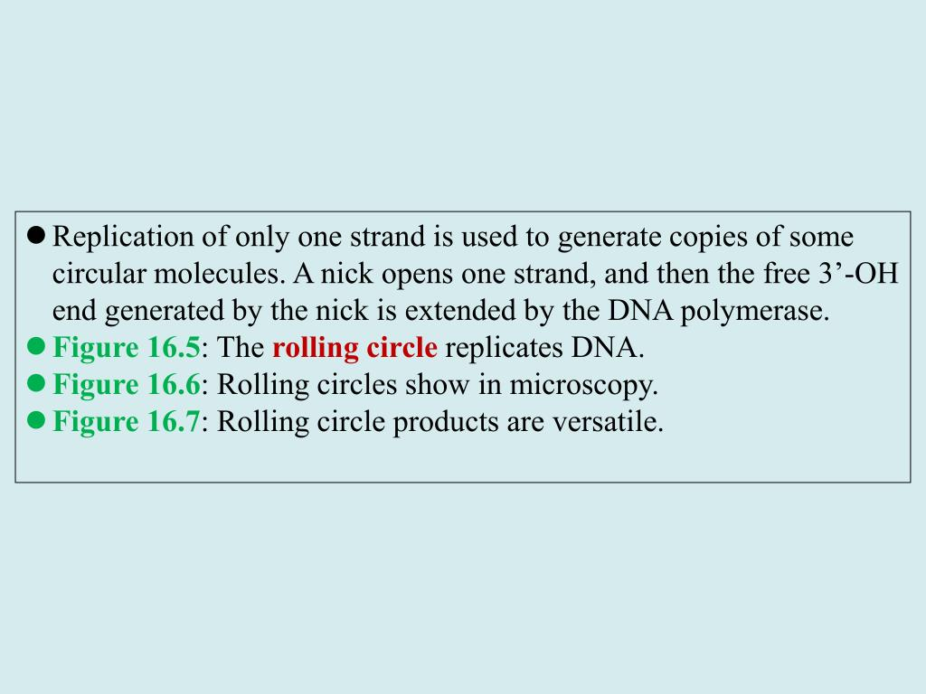 Replication of only one strand is used to generate copies of some circular molecules. A nick opens one strand, and then the free 3'-OH end generated by the nick is extended by the DNA polymerase.