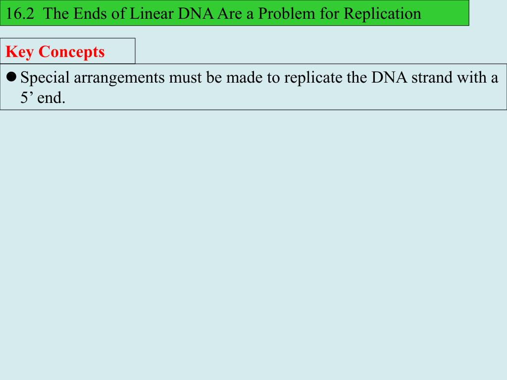 16.2  The Ends of Linear DNA Are a Problem for Replication