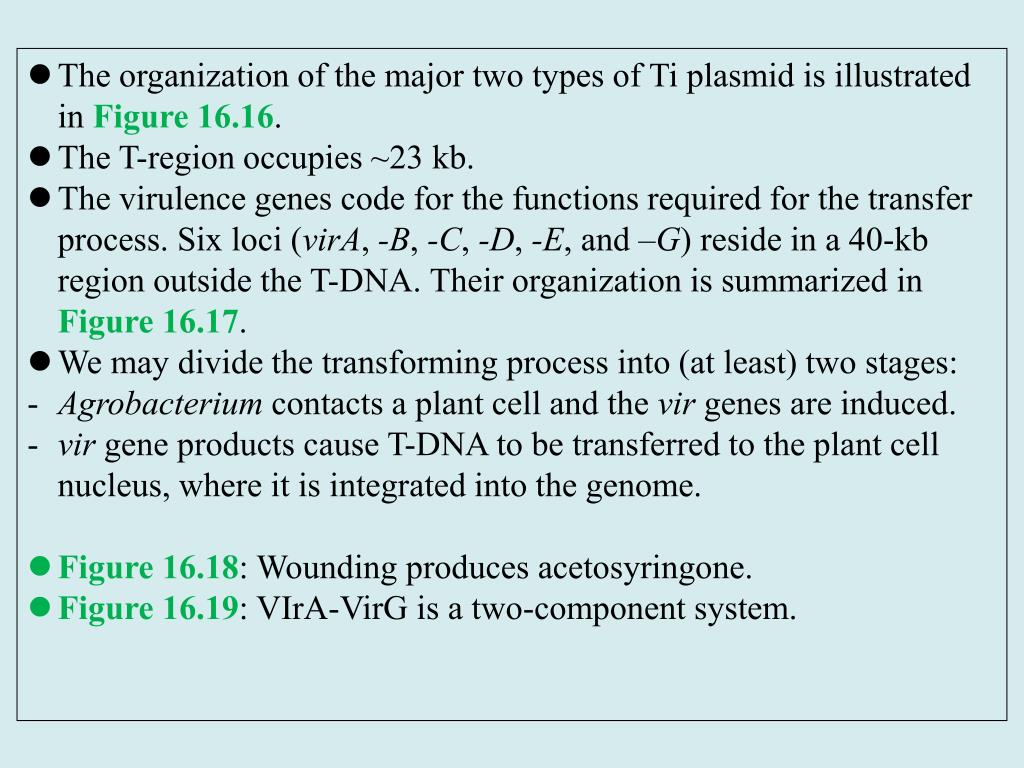 The organization of the major two types of Ti plasmid is illustrated in