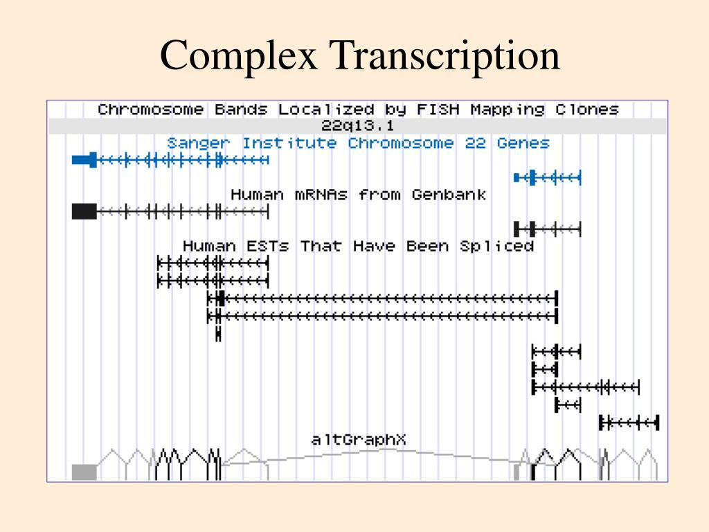 Complex Transcription