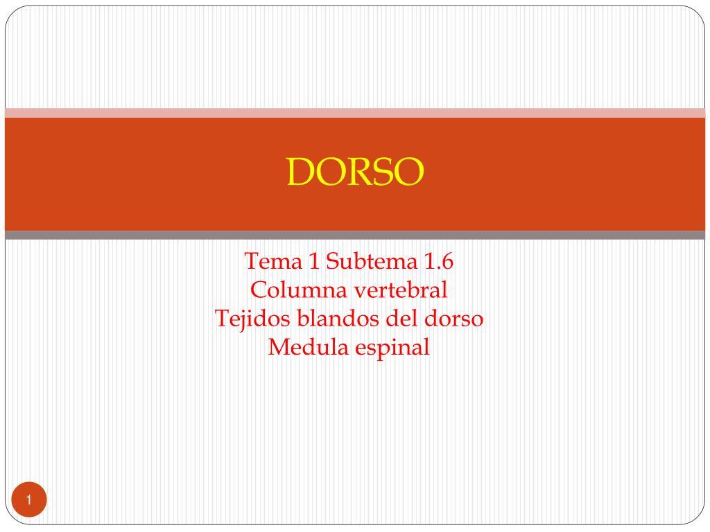 DORSO