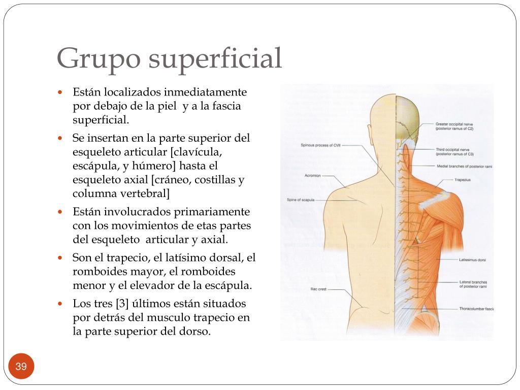 Grupo superficial