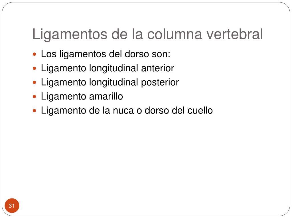 Ligamentos de la columna vertebral