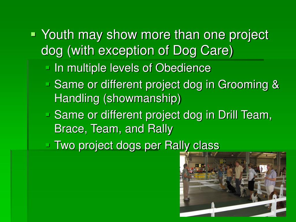 Youth may show more than one project dog (with exception of Dog Care)