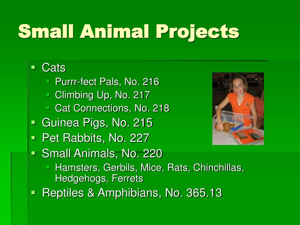 Small Animal Projects
