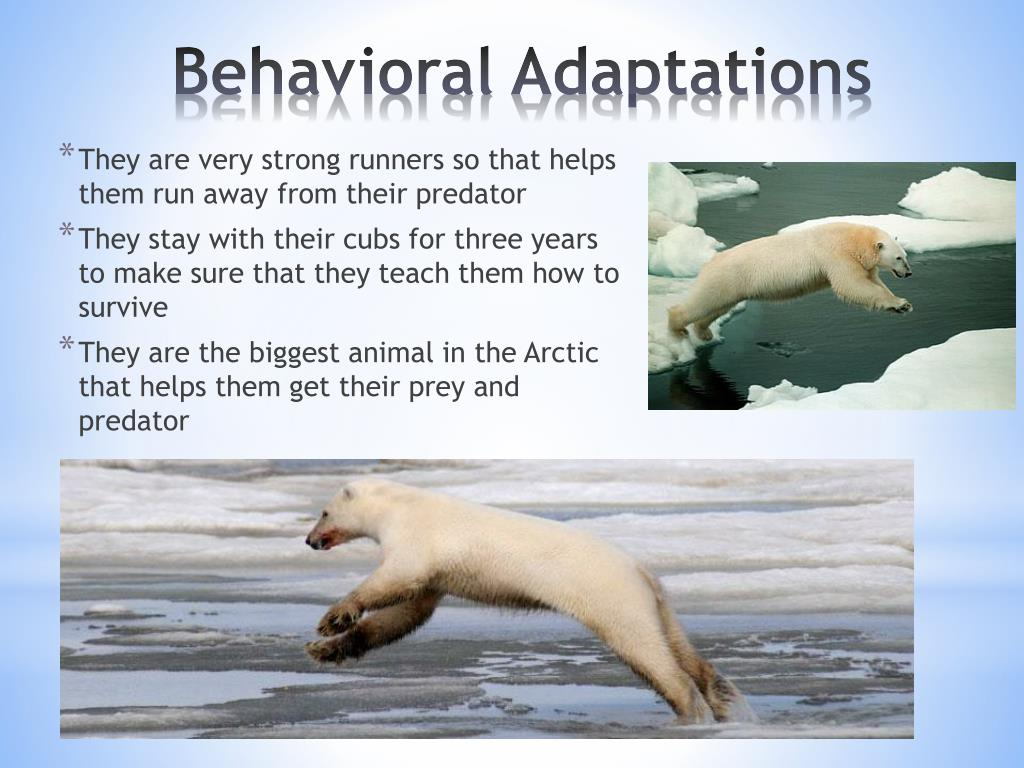 They are very strong runners so that helps them run away from their predator