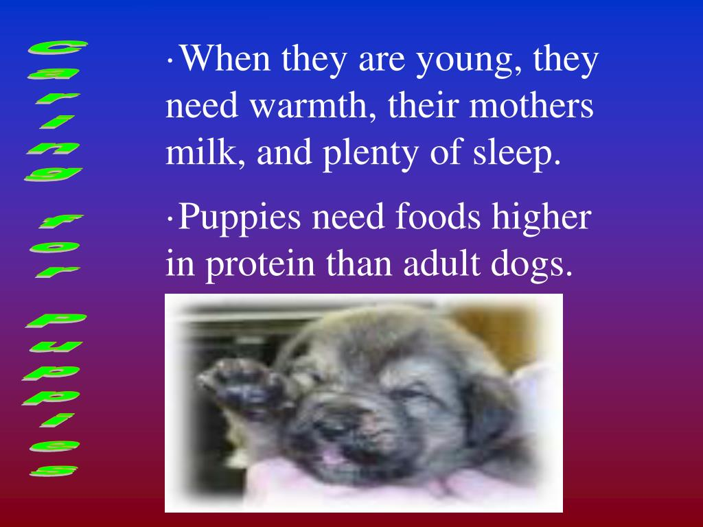When they are young, they need warmth, their mothers milk, and plenty of sleep.