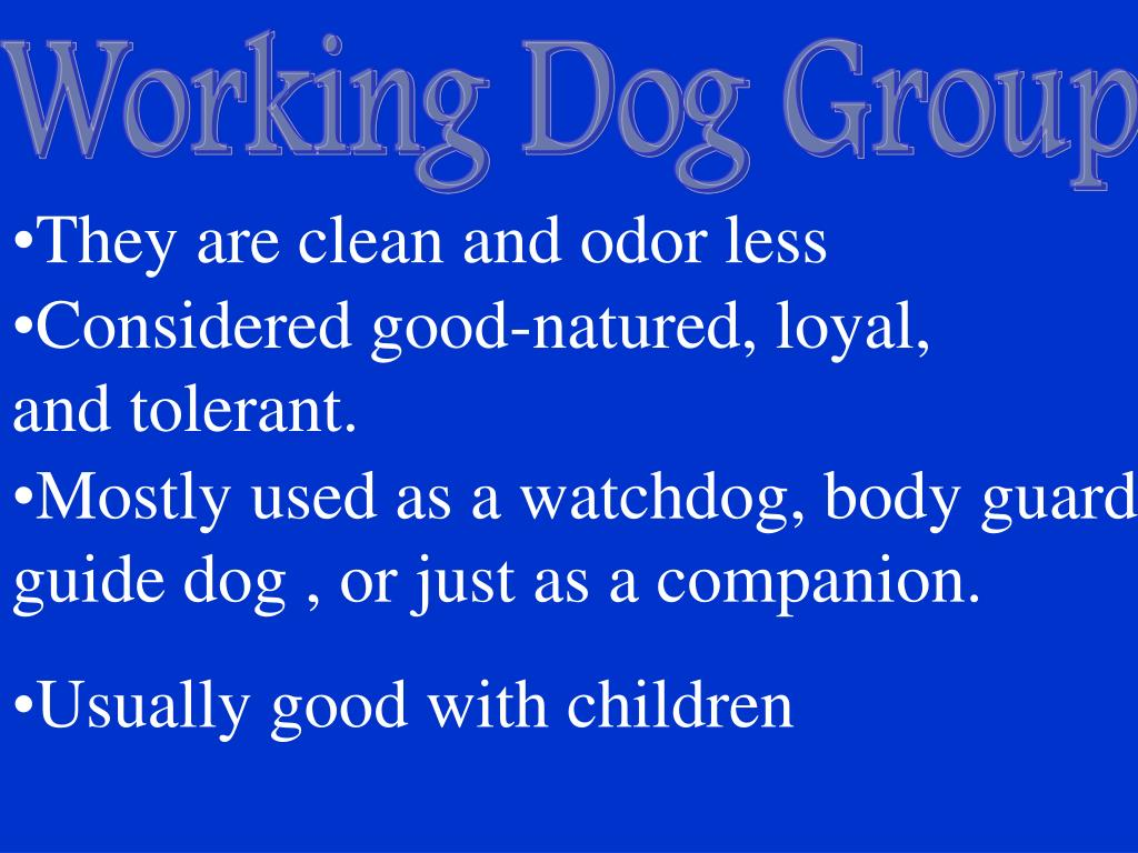 Working Dog Group
