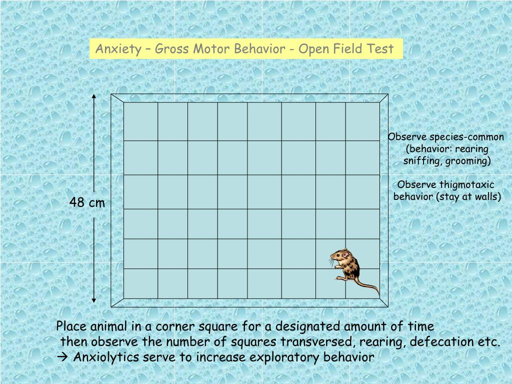Anxiety – Gross Motor Behavior - Open Field Test